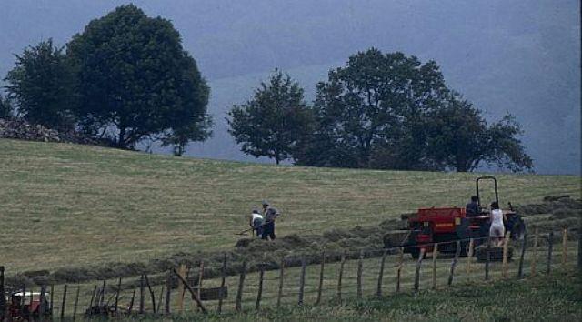Galicia perdeu 150.000 hectáreas de superficie produtiva en tres décadas